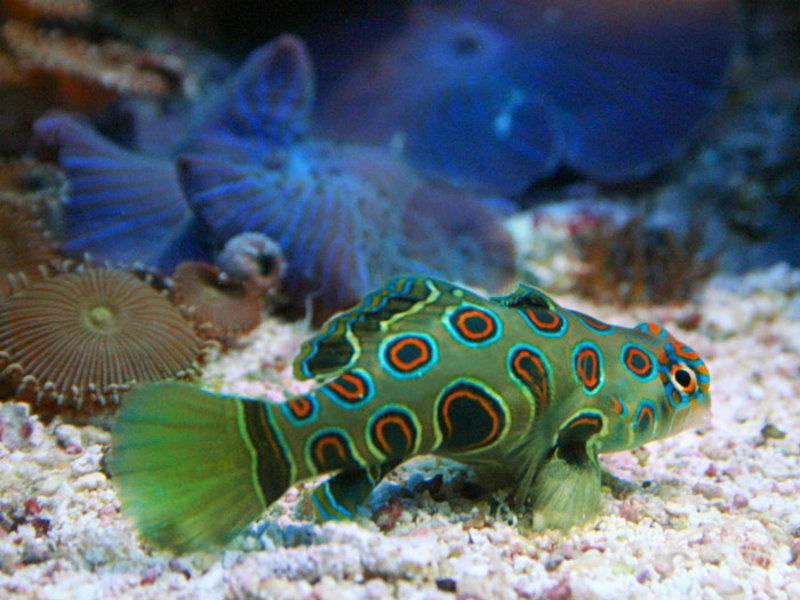 фото с описанием аквариумных рыб