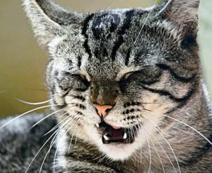 У кота насморк и чихает чем
