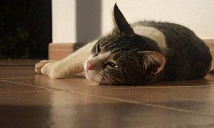 Что делать если у кошки глисты