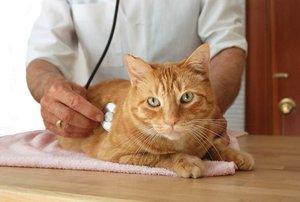 Как лечить у кота мочекаменную болезнь в домашних условиях
