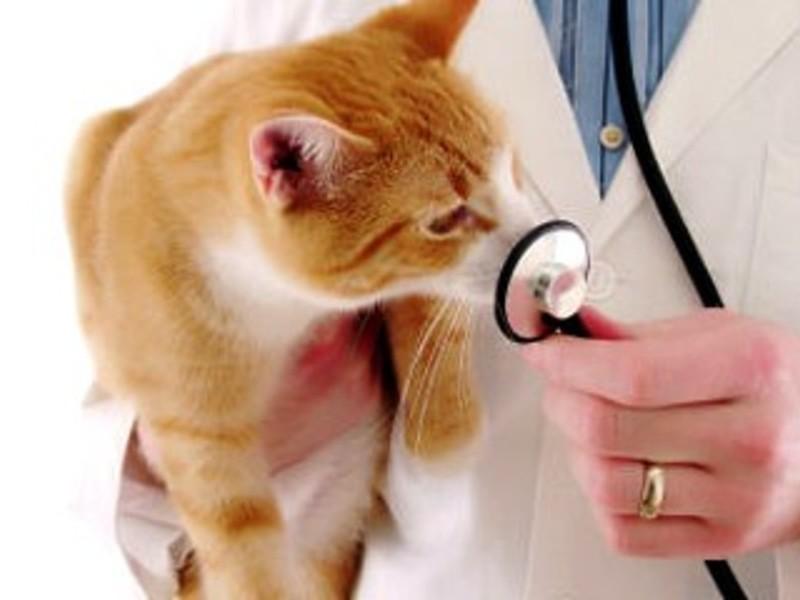 Способы лечения кошки