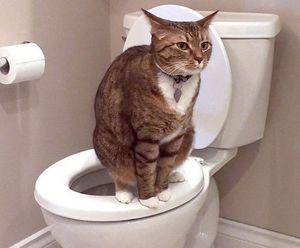 Лечение поноса у котов в домашних условиях