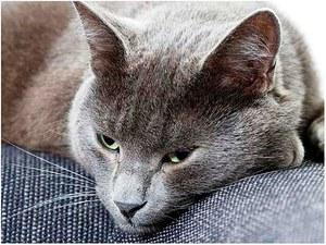 Как вылечить запор у кошки дома