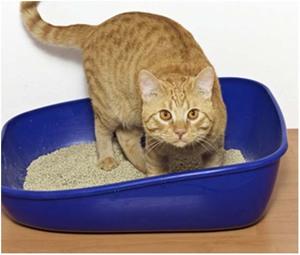 Как определить, что у кошки запор?