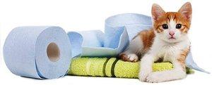 Лечение запора у котов - лекарственные средства и травы.