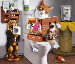 Лечение запора у котов - простые домашние методы.