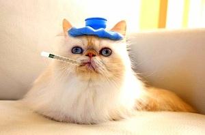 Фоспренил для кошек инструкция по применению