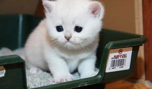 Запор у кошки - учимся помогать животному