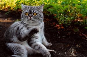 Запоры у кошек - причины и варианты лечения дома