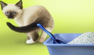 Лечение запора у самых маленьких котят нужно проводить особенно аккуратно
