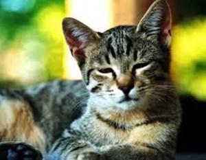 Если кот вялый не ест и нос сухой