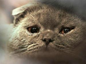 Слезиться глаз у кота что делать в домашних условиях