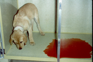 У кота понос со слизью кровью