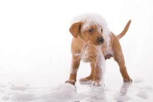 У собаки перхоть и чешется