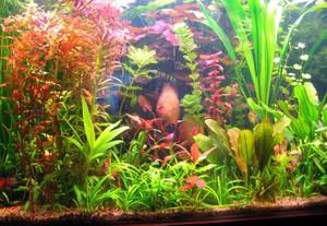 Особенности содержания водорослей в аквариумах