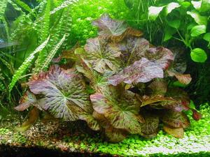 Разновидности аквариумных растений в зависимости от способа высадки