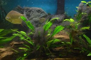 Описание болезней аквариумных растений и способы лечения