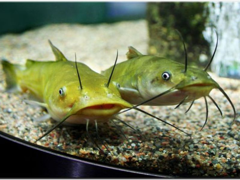 Аквариумные рыбки фото с названием и описанием, более 200 разновидностей