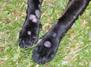 стригущий лишай у собаки фото начальная стадия