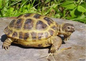 Вид черепахи