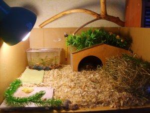 Как выбрать дом для черепахи