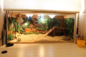 Обустройство домика для черепахи