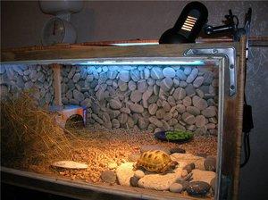 Как правильно содержать домашних условиях черепаху 734