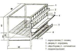 На схеме - клетка для содержания кур-несушек