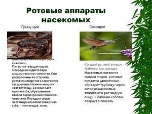 Фото строения ротовых аппаратов у разных видов насекомых с пояснениями