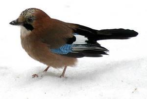 ранняя птаха фото