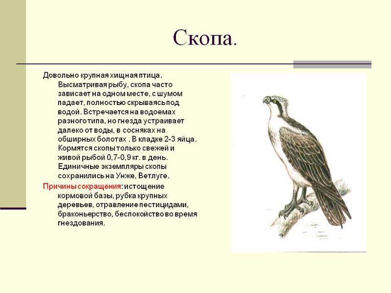 фото с описанием птиц