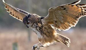 Повадки и образ жизни хищных птиц