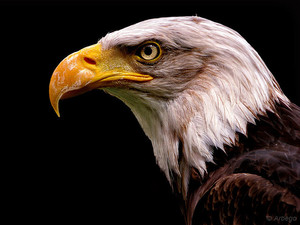 Список самых хищных птиц