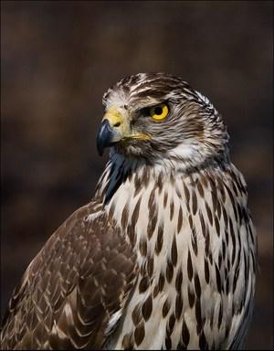 Хищные птицы и их характеристика