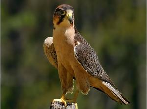 Ареал обитания хищных птиц