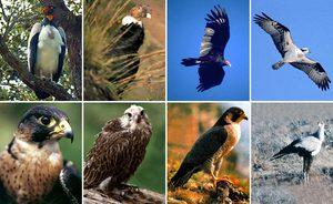 Как ведут себя хищные птицы