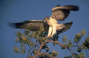 Хищники птицы