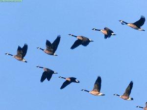 картинки улетающие птицы