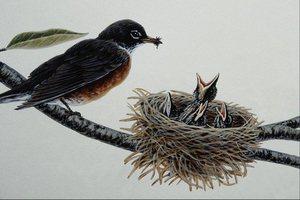птица сидя фото