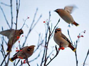 Картинки прилета птиц наступления весны