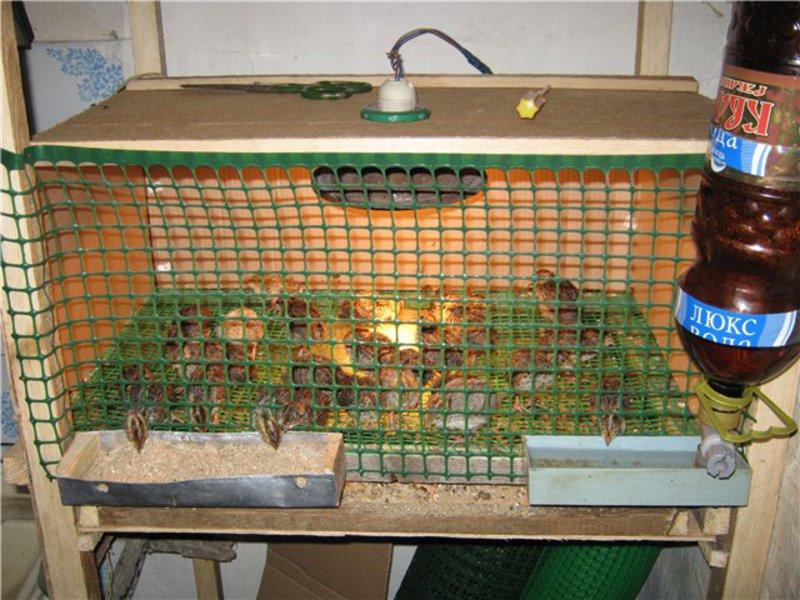 Поилки для птицы своими руками фото 68