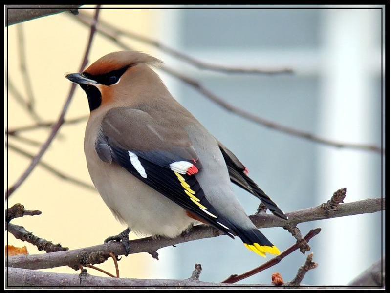 весенних птиц с названиями