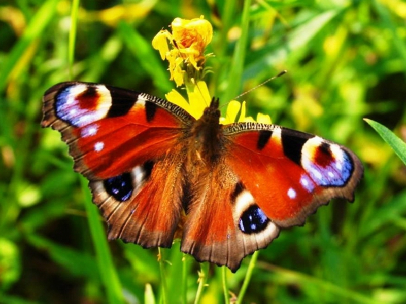 кто ловит ночных бабочек окружающий мир 3 класс