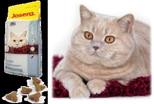 Сухой корм для кошек супер премиум класса