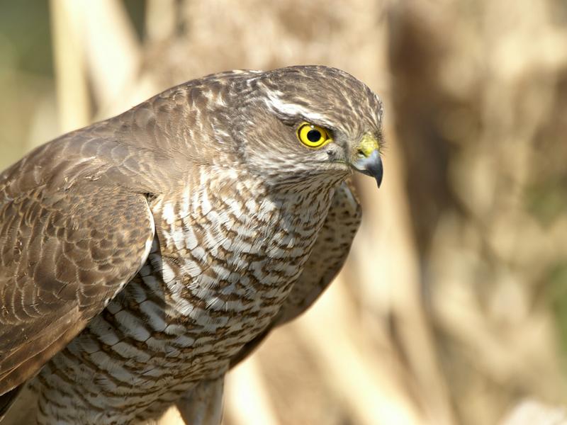 Хищные птицы южного урала