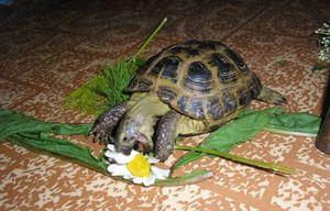 Как содержать за черепахой