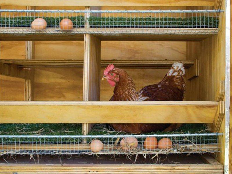 Гнездо для несения яиц своими руками
