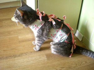 Коту два года можно кастрировать
