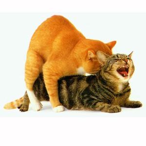 Что делать если кот просит кошку в домашних
