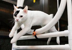 Как дрессировать кота домашних условиях